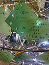 20060706201048_edited_1